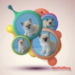 Kittens Keyana 6 weken