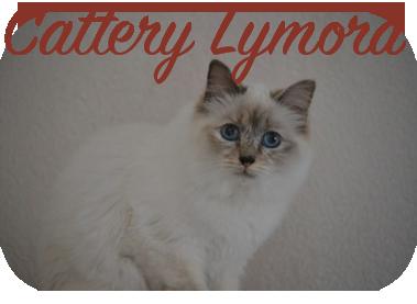 Heilige Birmanen Cattery Lymora